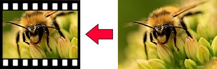 photo showing a comparison of true macro photography against a 35mm frame of film