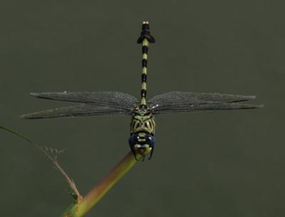 A dragonfly came by to visit