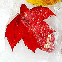 another autumn photo idea - frozen leaf