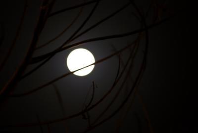 full moon photography tips - photo #29