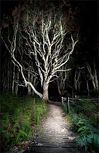 painting with light - illuminated tree