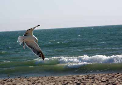 Photograph of seagull - submitted to digital-photography-tips.net by Sandra Hayes