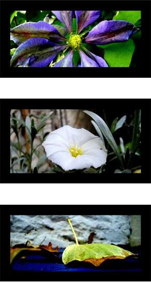 flower montage - digital photography tips