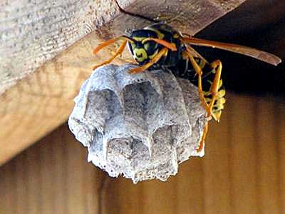 picture of a wasp showing how image editing software can improve photos from digital cameras