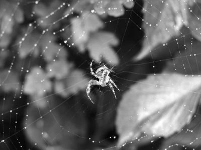 Web Sparkles