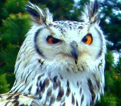 Photograph of an owl - submitted to digital-photography-tips.net by Steph
