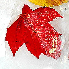 another autumn photo idea - frozen leaf