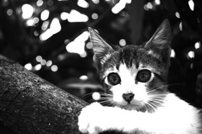 The Kitten is having trouble climbing down.